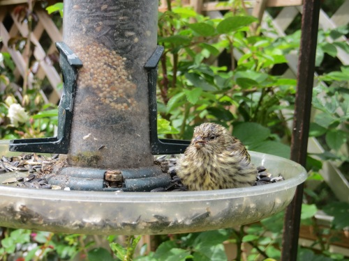 on the feeder