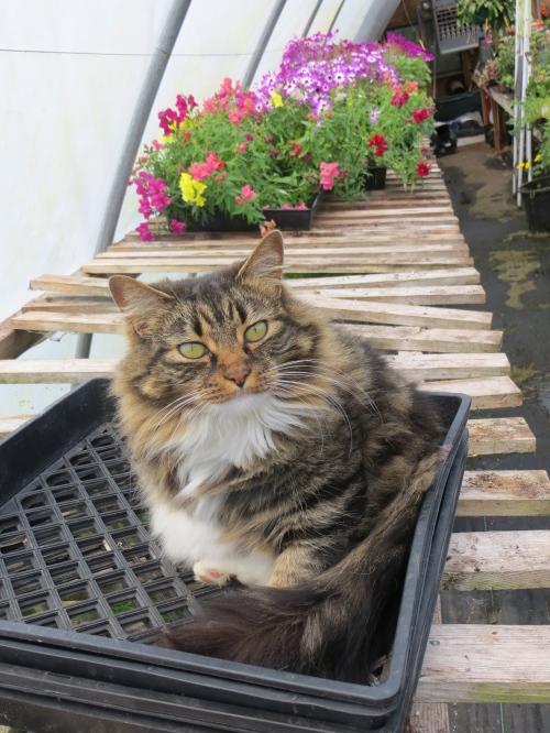 greenhouse kitty