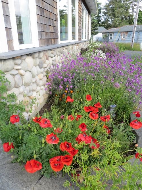 OBS garden