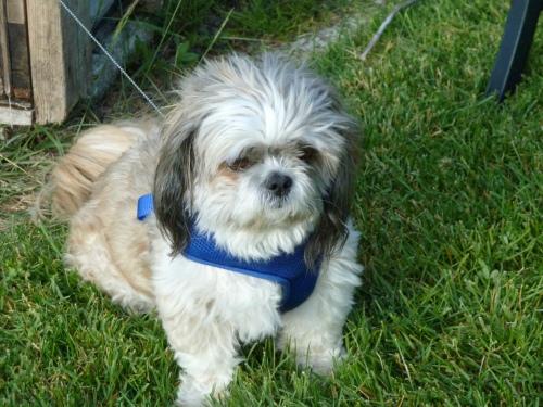 Devery's dog Tuffy