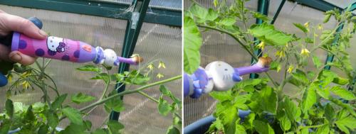 greenhouse tomato pollenization