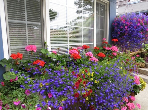 guest cottage windowbox, north wall