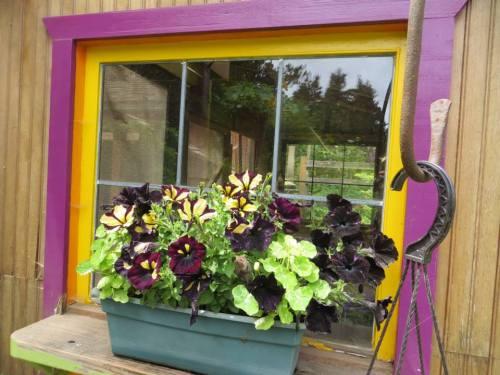 chicken palace window box
