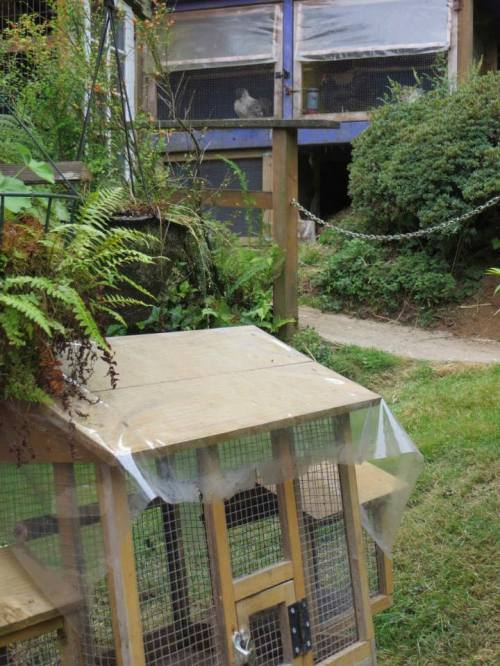 just uphill: the chicken coop