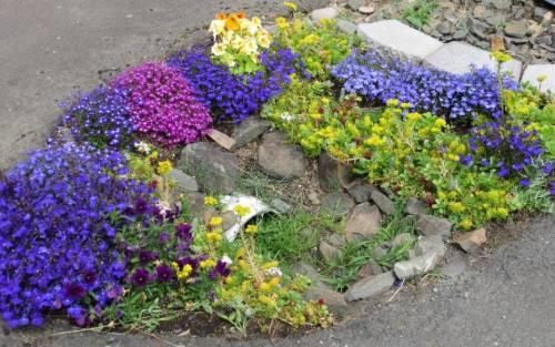 a miniature garden