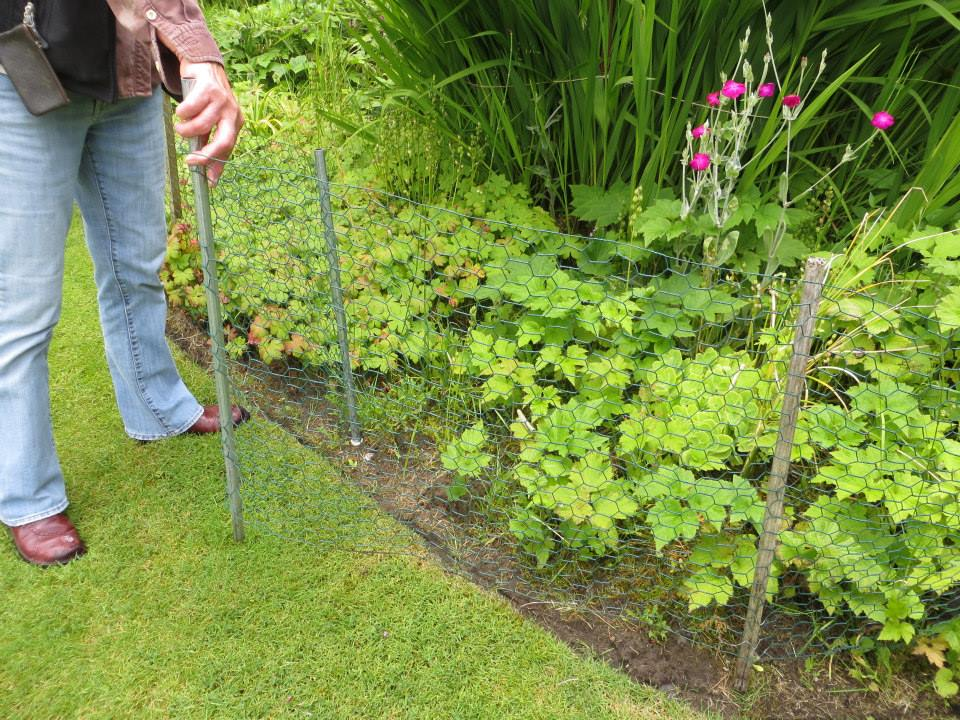 Good Mike Demonstrates A Simple Clever Fence To Keep Chickens Out Of The Garden  Beds.