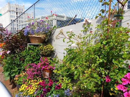 food coop garden
