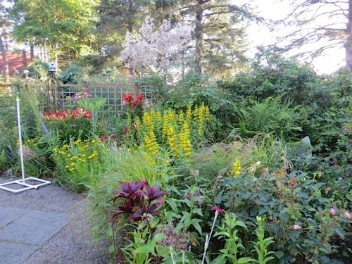 inside the fenced garden