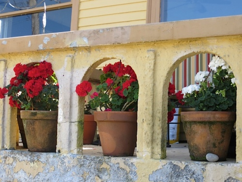 perfect use of red geraniums