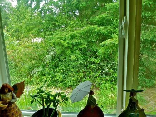 from the kitchen window, looking south to the greenbelt