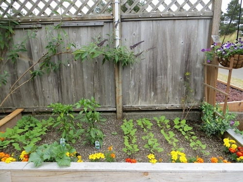Gene's edible raised bed