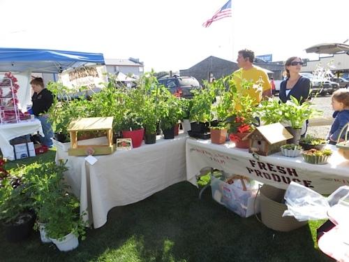 tomato plants at the market