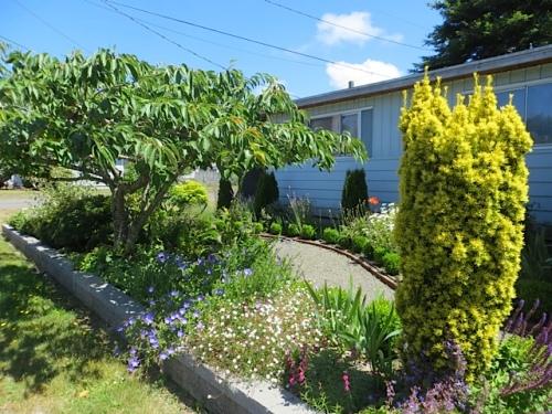 Mike's garden