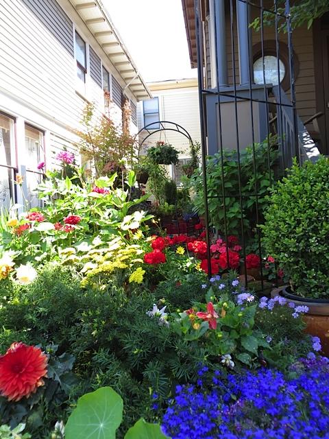 a narrow city side garden