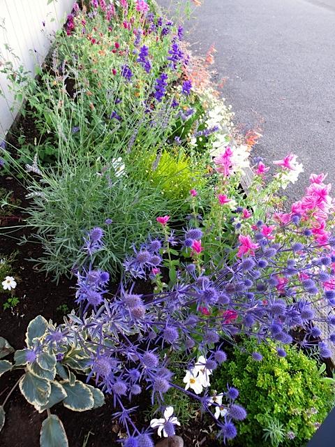 I weeded the port office garden.