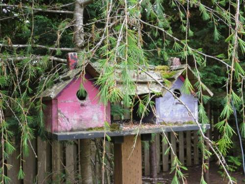 rustic birdhouses in woodsy south side garden