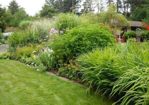 NW garden at edge of lawn, photo by Kathleen Sayce