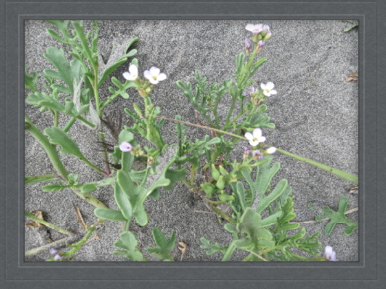 amazing plants grow in the sand...