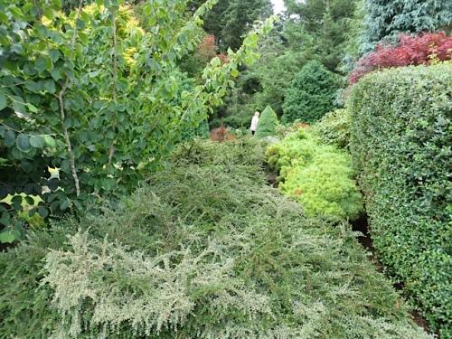 a garden glimpse