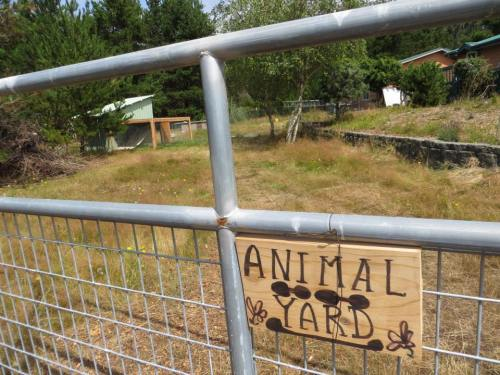 At first, the animal yard still looked empty.