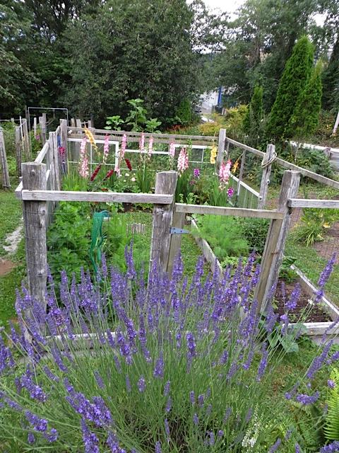 Ann's fenced veg garden