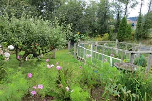 looking over Ann's veg garden, deer proof