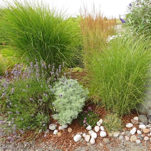 Artemisia, Lavender, grasses