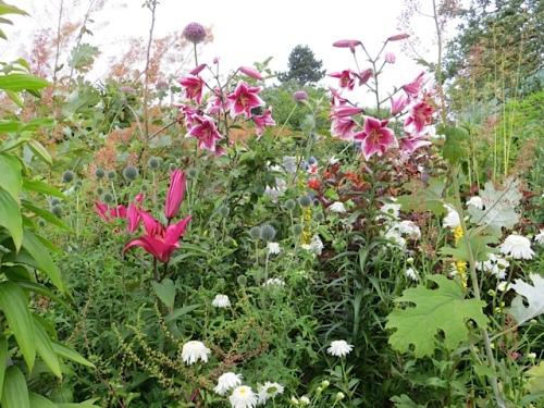 lilies in back garden