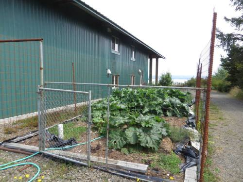 more veg in a huge bay view outbuilding