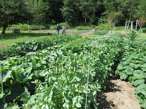two large garden beds