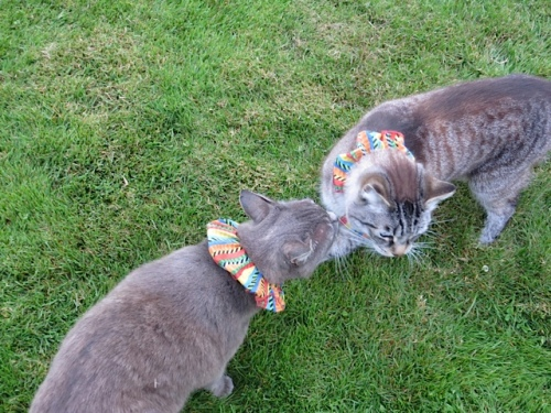 Smokey and Frosty in their new collars