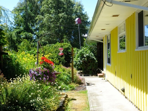 Cheri's front garden