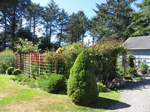 on the other side of the driveway, looking northwest to deer fenced garden