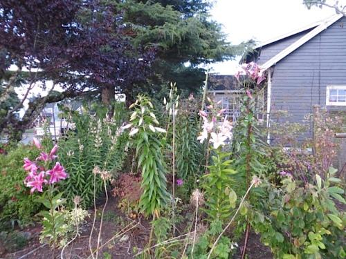 front east side garden: most frustrating area