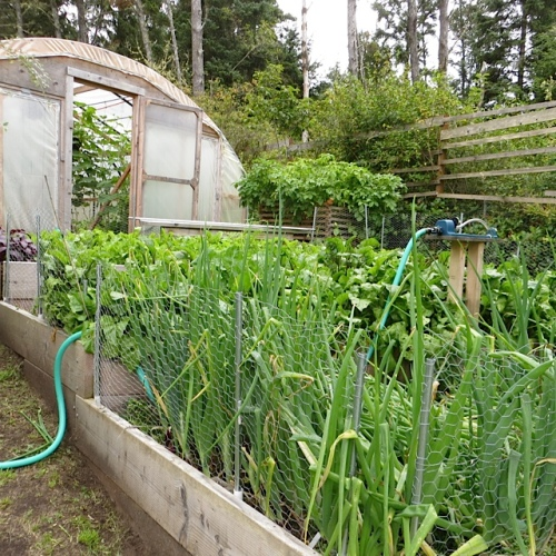 the big poly tunnel