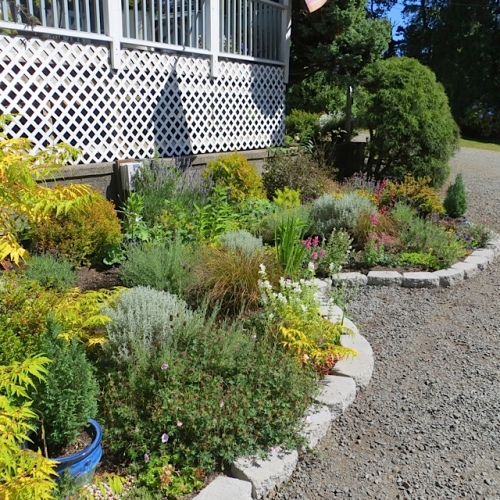 the driveway garden, newly redesigned this year