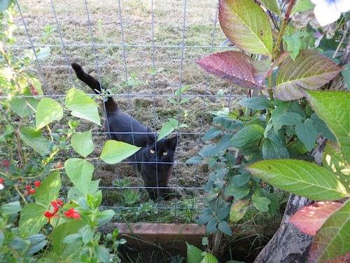 Onyx from next door