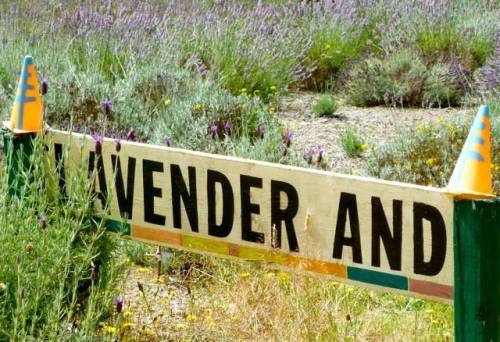 lavender and
