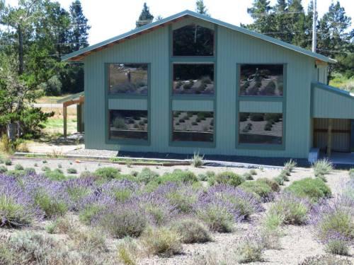 lavender reflection