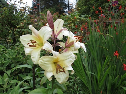 another lily