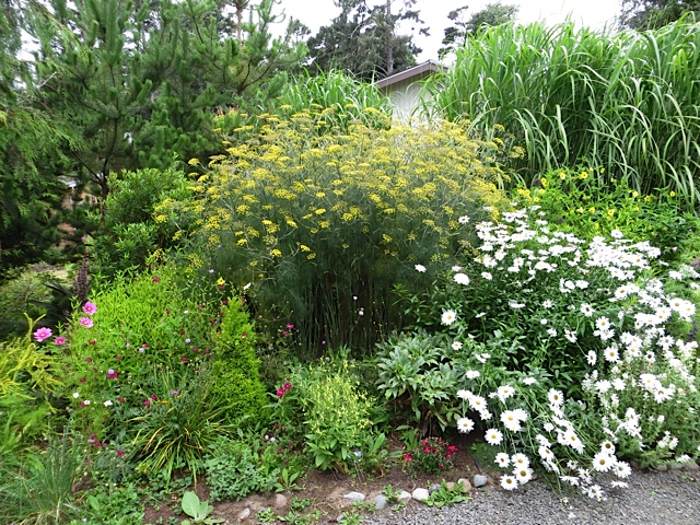 bronze fennel, lovely and thuggish