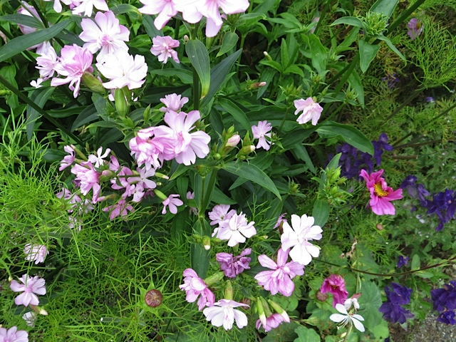 phlox? wish photo had turned out better