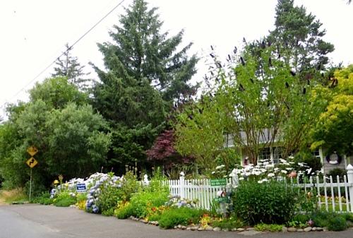 white daisies, white pickets = classic cottage garden