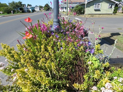 northernmost planter on east side of Pacific