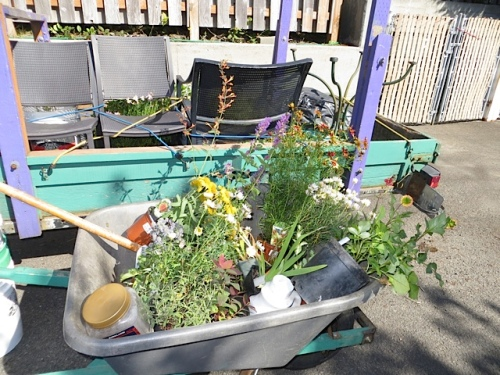 barrow of plants (backed with our trailer with table and chairs)