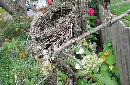Another tour guest pointed out this nest!