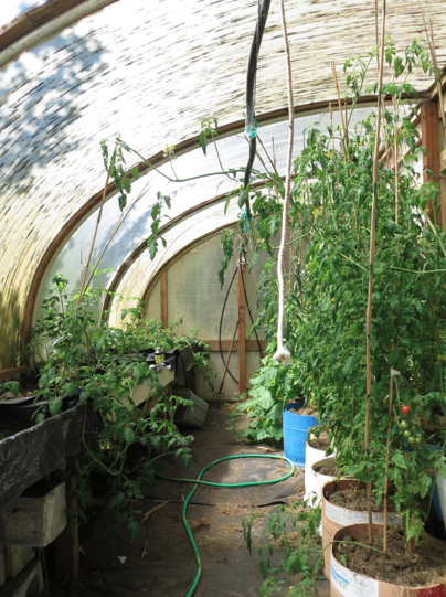 the half greenhouse
