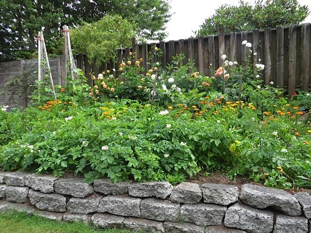 A Raised Veg And Flower Garden
