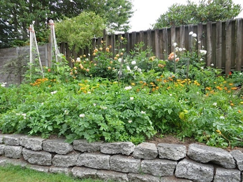 a raised veg and flower garden
