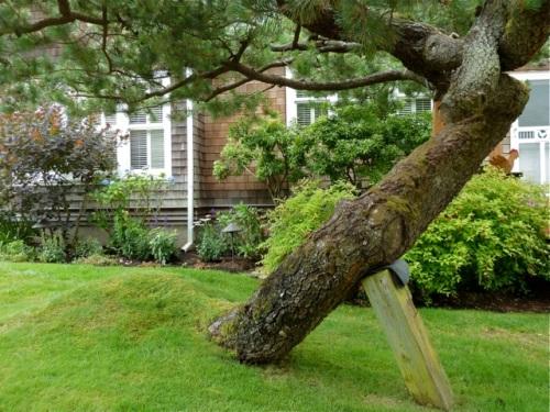 Allan's tree photo